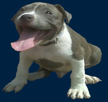 Celebrities Who Own Pit Bulls | Dog Breeds Picture