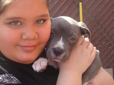 Pit Bull pictures