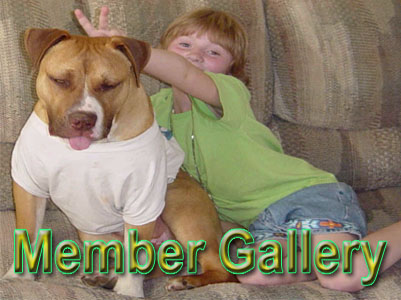 APBR Member Pit Bull picture gallery
