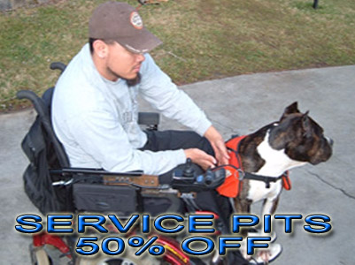pit bull service dog discount registration