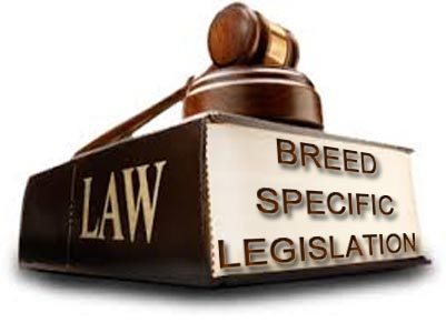 Pit Bull Breed Specific Legislation - BSL