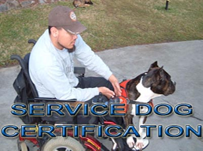 Pit Bull service Dog Certification
